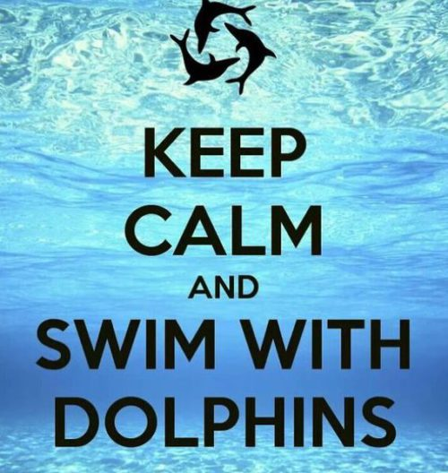 Keep Calm and Swim with the Dolphins